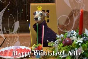 *〜ナイルの誕生日1〜*