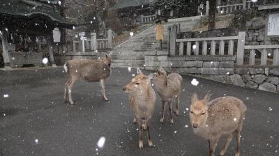 雪の中の鹿