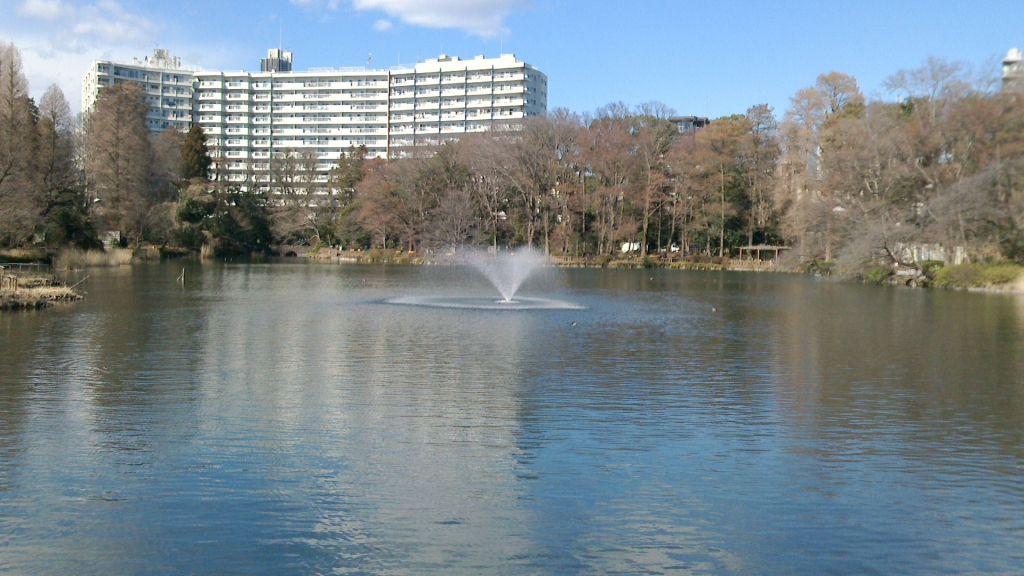 井の頭公園の池2
