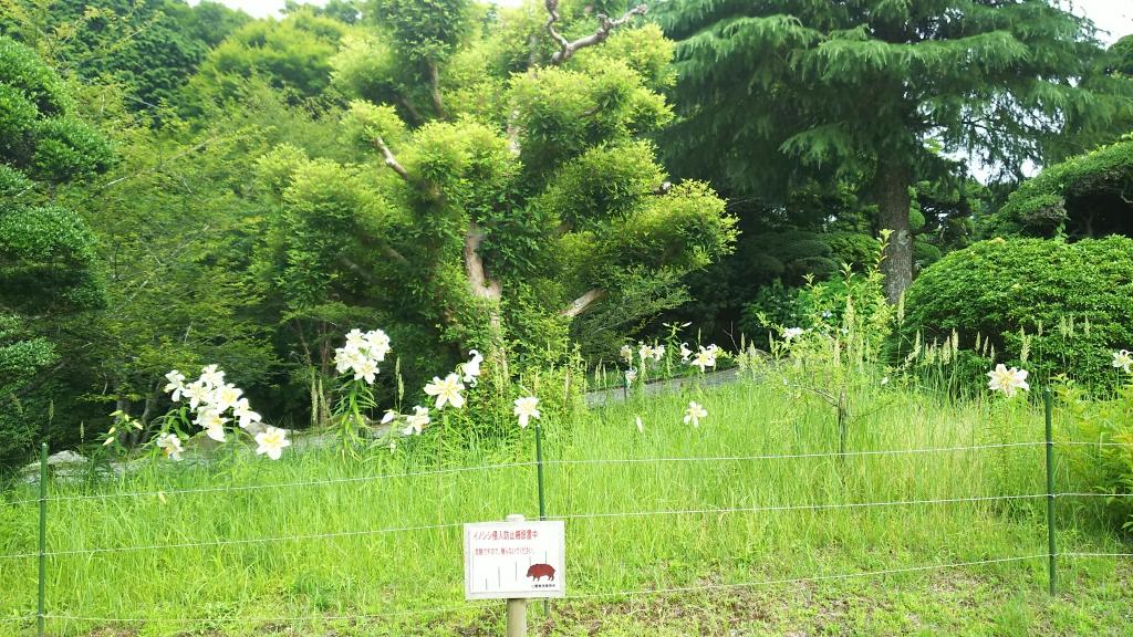 恩賜箱根公園3
