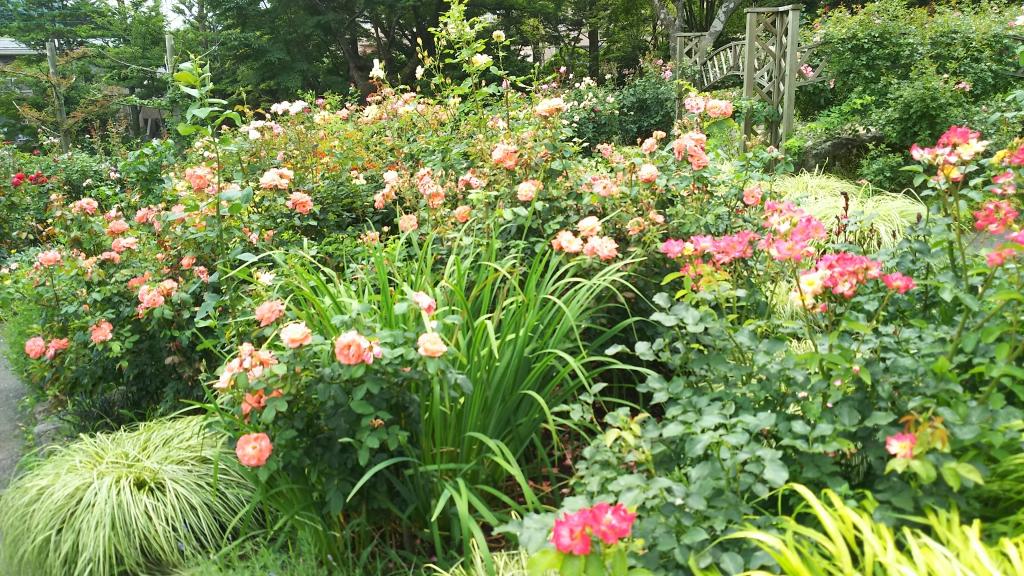 箱根強羅公園のバラ2