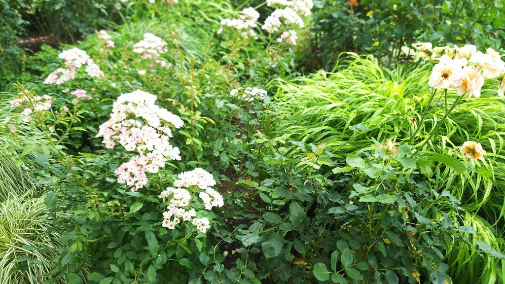 箱根強羅公園の花4