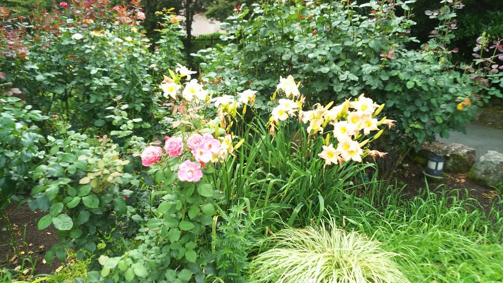 箱根強羅公園の花5