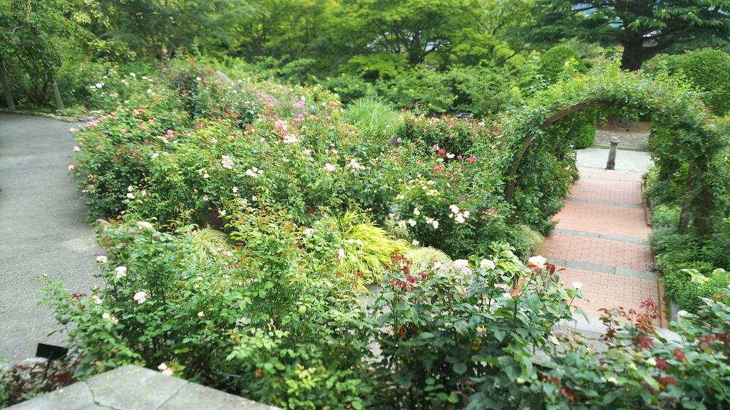 箱根強羅公園のバラ6