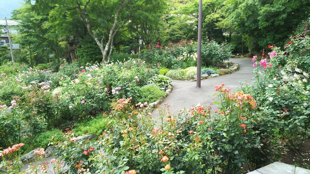 箱根強羅公園のバラ7