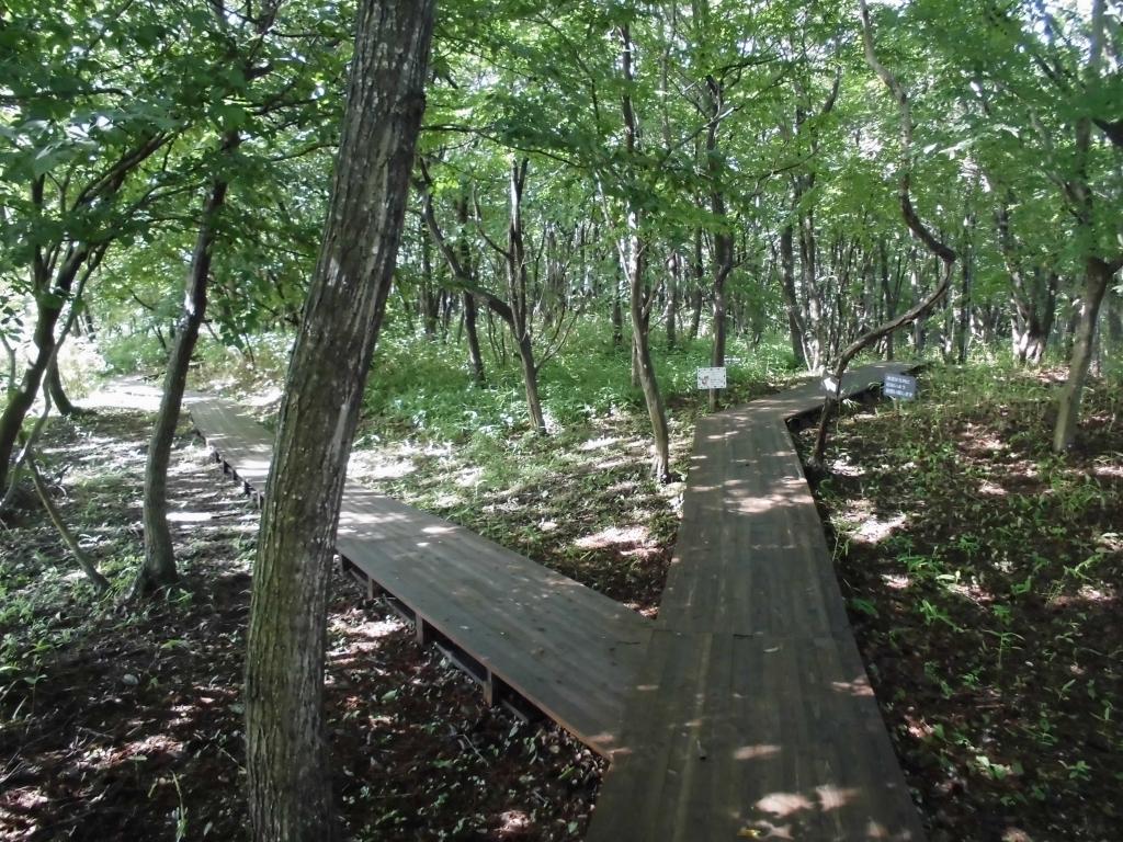 那須の自然の森1
