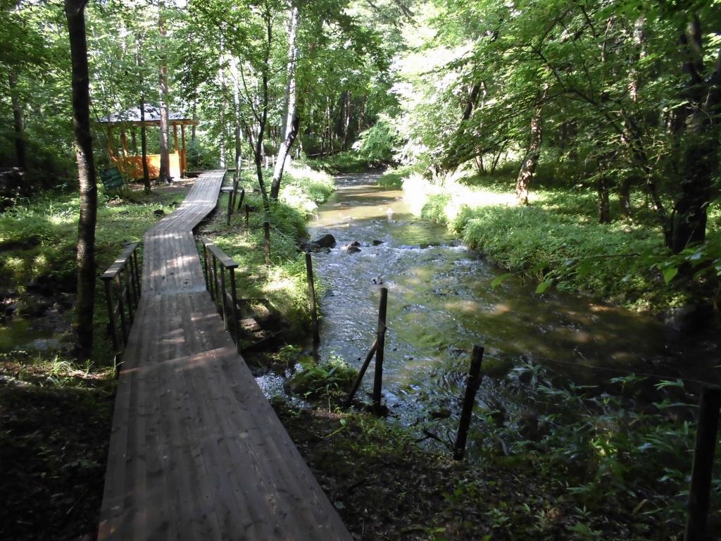 那須の自然の森2