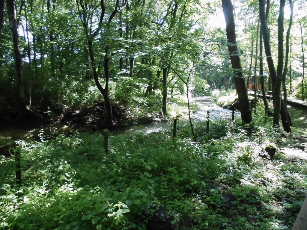 那須の自然の森3