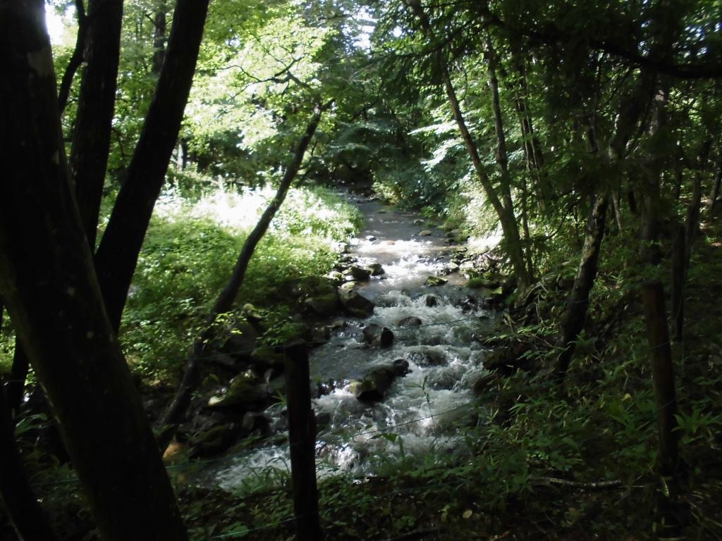 那須の自然の森5
