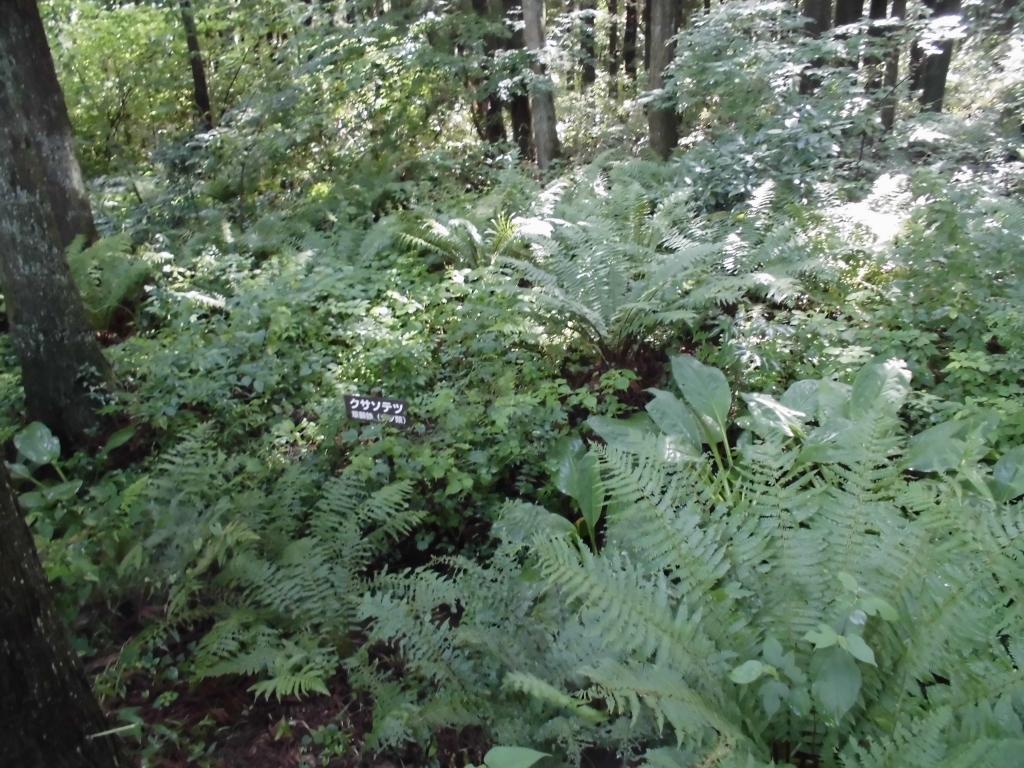 那須の自然の森7