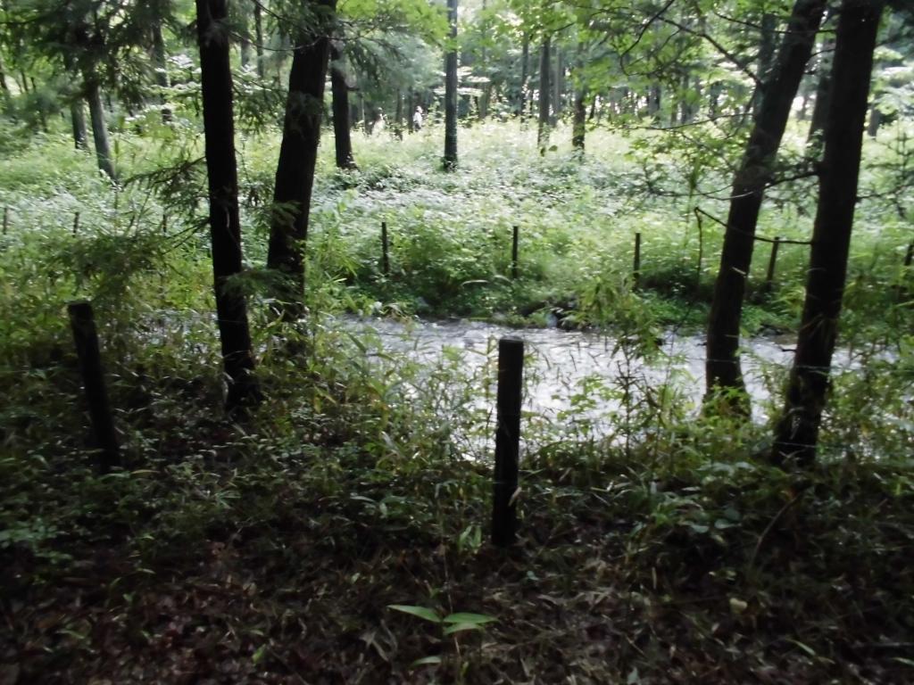 那須の自然の森9
