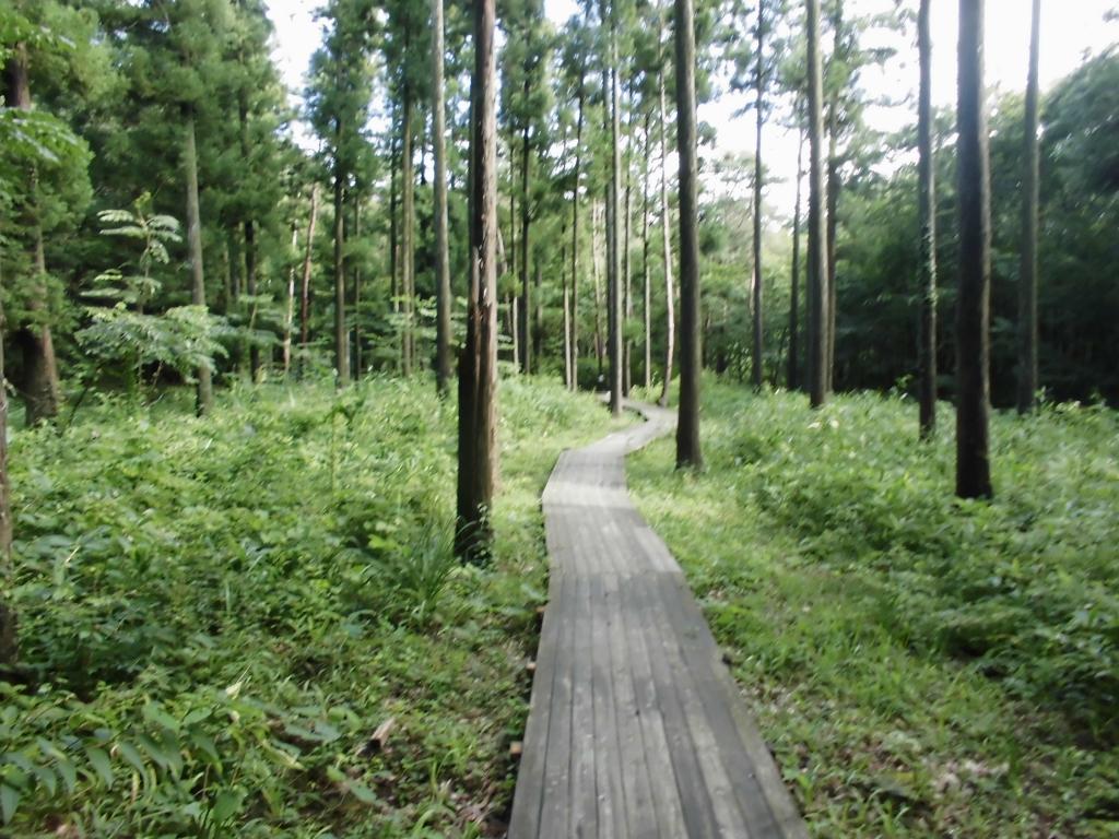 那須の自然の森10