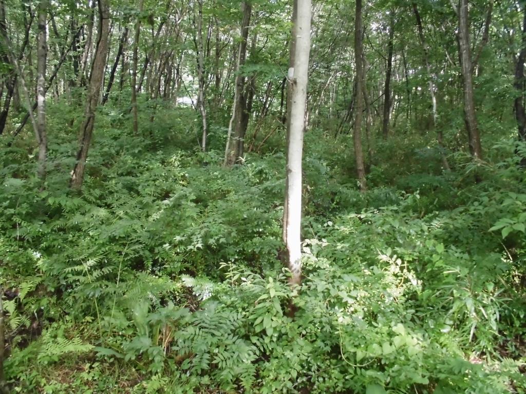 那須の自然の森11