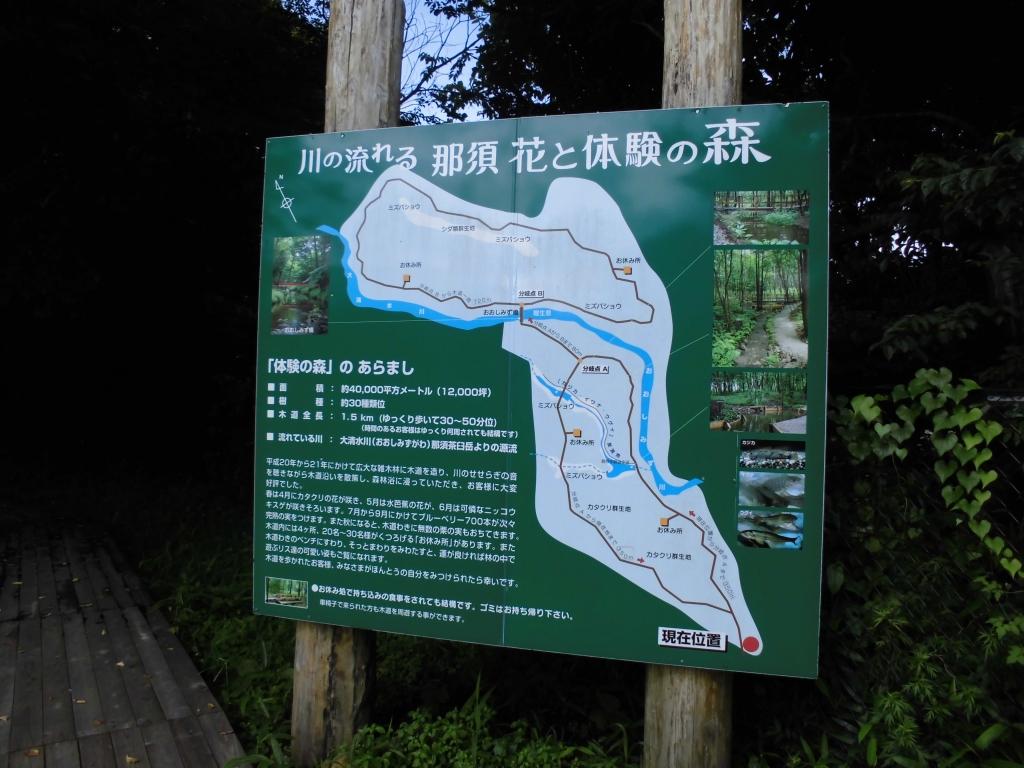 那須の自然の森12