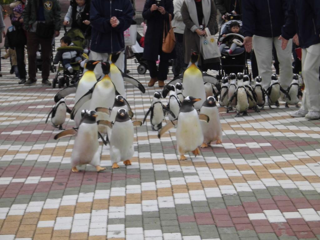 南紀白浜のペンギン1