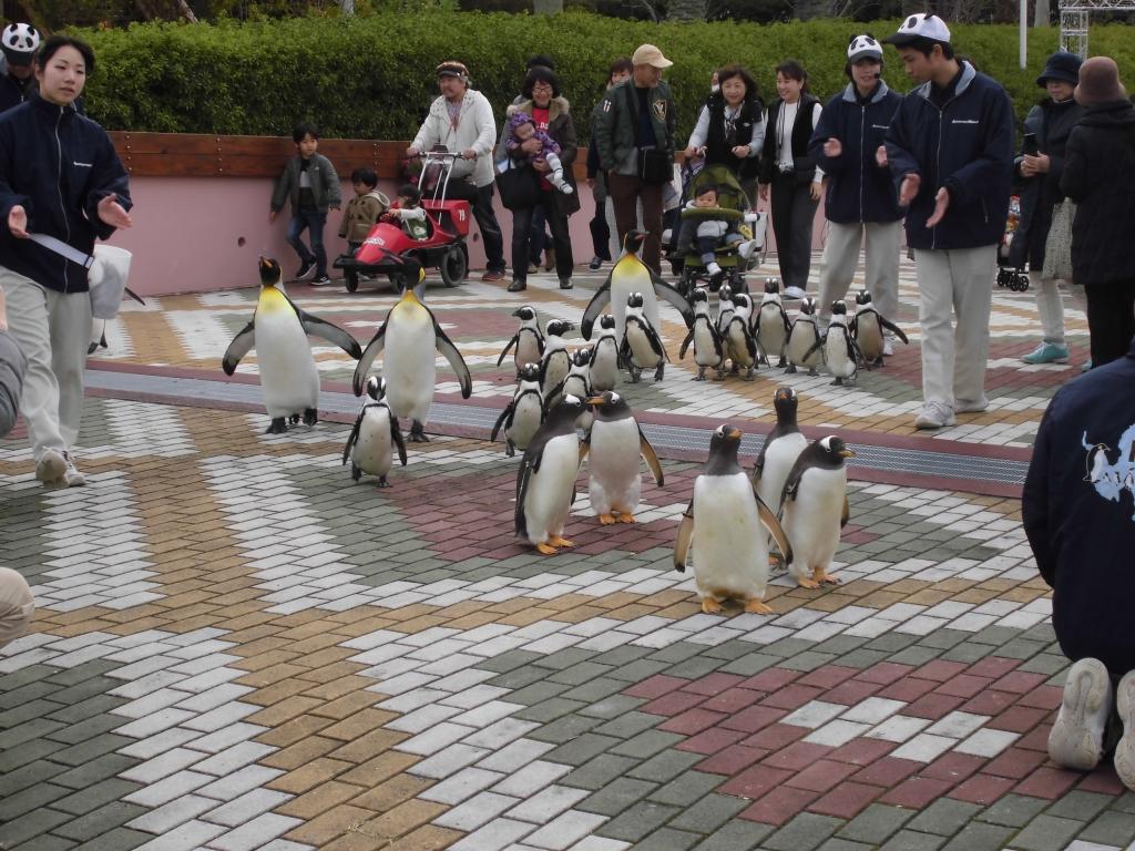 南紀白浜のペンギン2