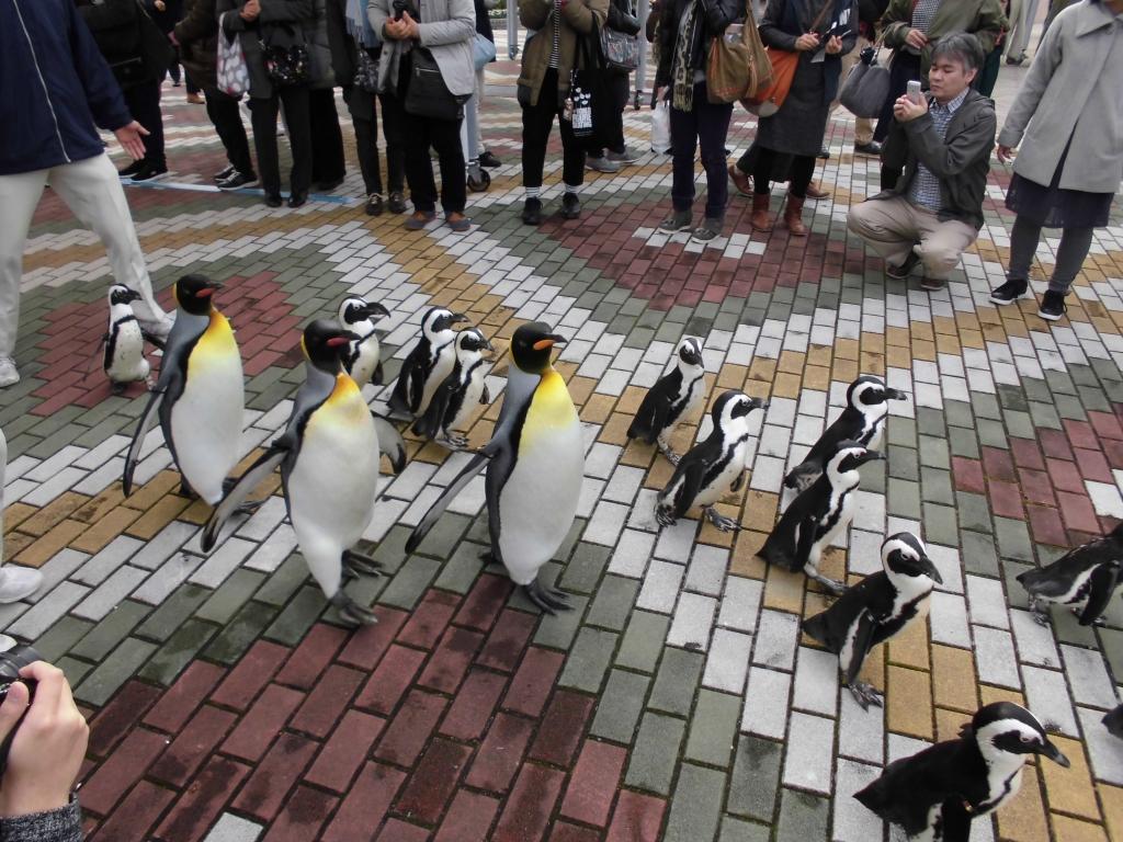 南紀白浜のペンギン3