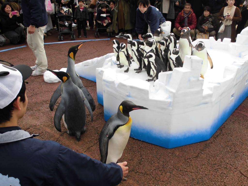 南紀白浜のペンギン4