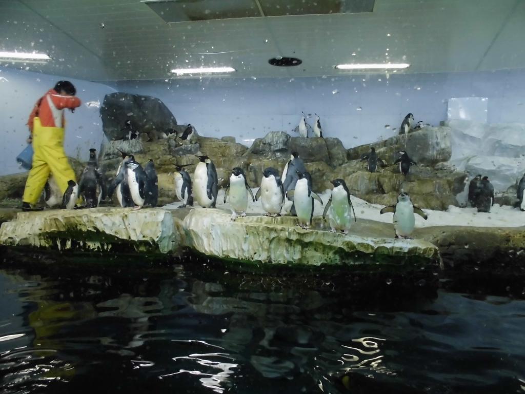 南紀白浜のペンギン6