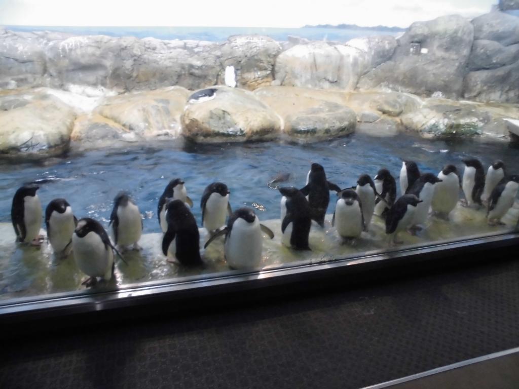 南紀白浜のペンギン7