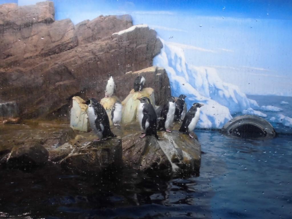 南紀白浜のペンギン8