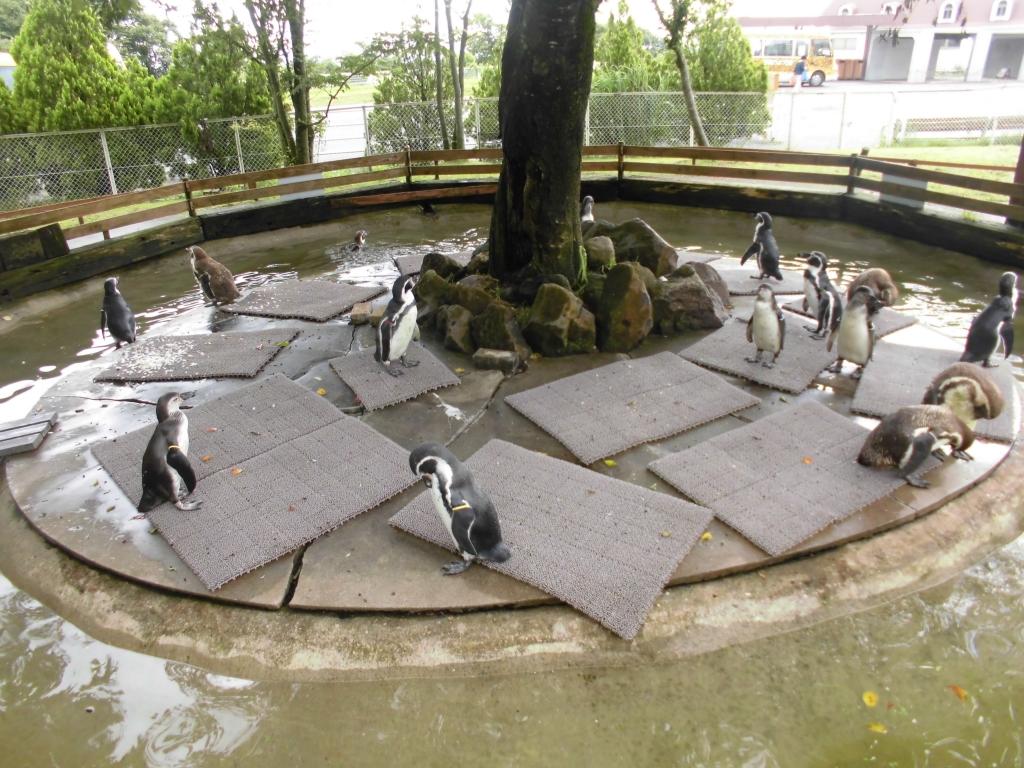 那須高原のペンギン2