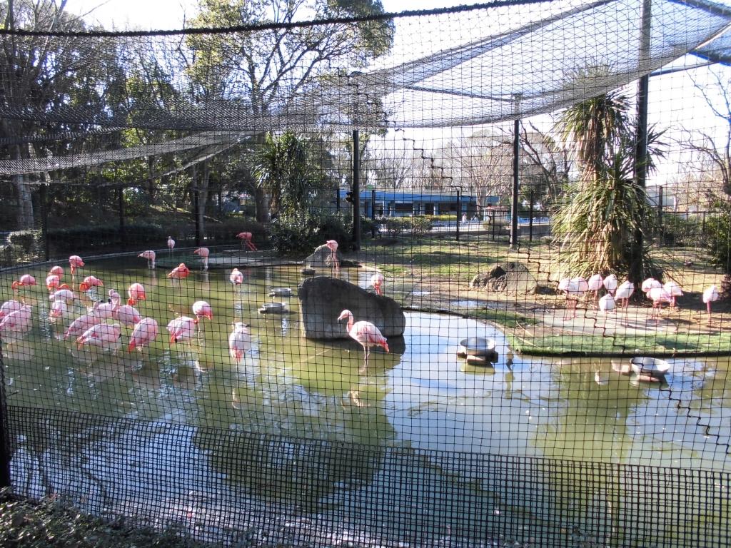 千葉市動物公園のフラミンゴ