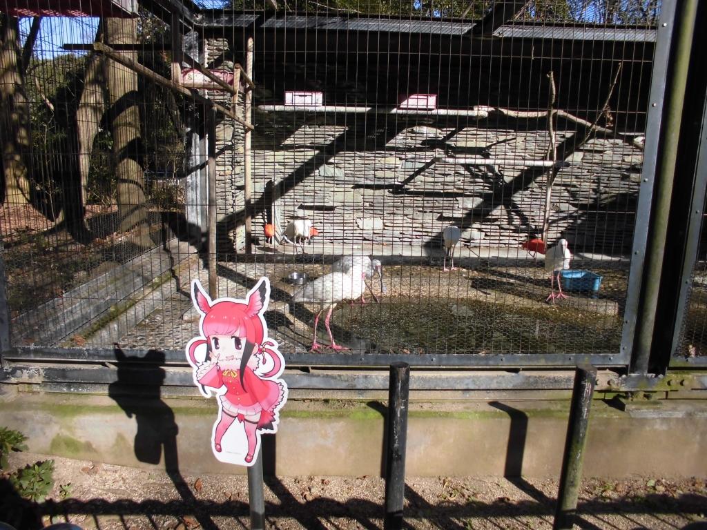 千葉市動物公園のショウジョウトキ1
