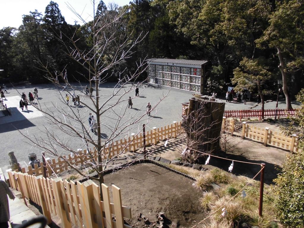 鶴岡八幡宮の大イチョウの木2020年その2