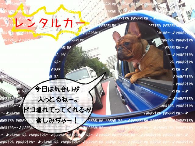 frenchbulldog 2che SDC 01