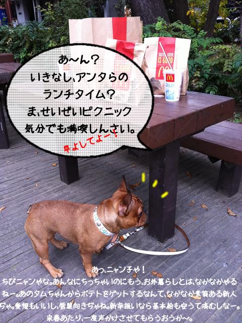 frenchbulldog 2che SDC 02