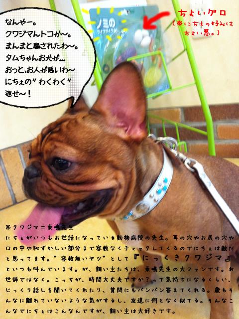 frenchbulldog 2che SDC 03