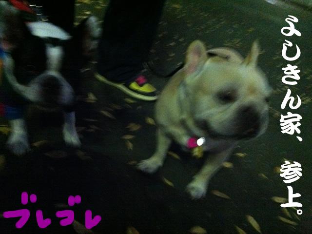 frenchbulldog 2che SDC 14
