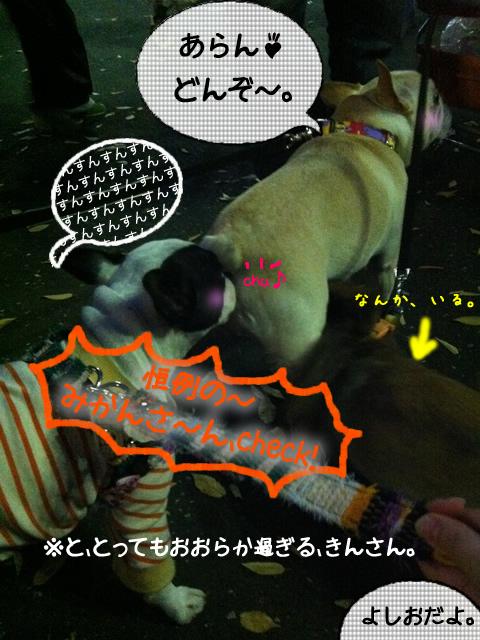 frenchbulldog 2che SDC 20
