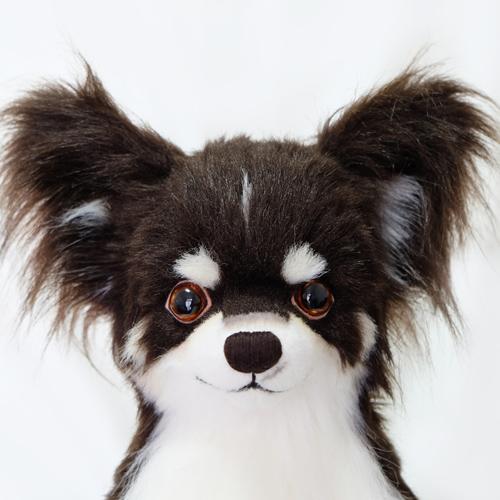 ウェイトドッグ チワワのウエイトドッグ 愛犬