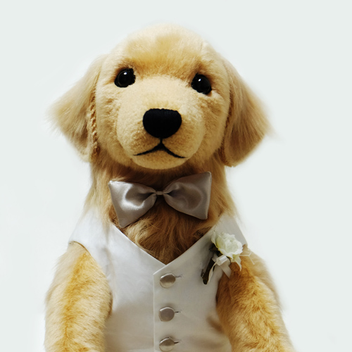 ゴールデンレトリバーのウェイトドッグ 結婚式 愛犬