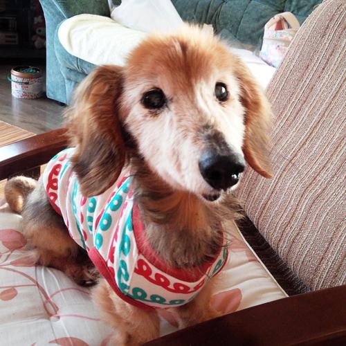 愛犬チャオちゃんのぬいぐるみ 両親への贈り物