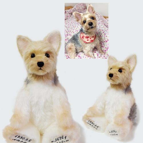 ヨークシャーテリア 愛犬 ウェイトドール