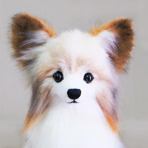パピヨン 愛犬のウェルカムドール