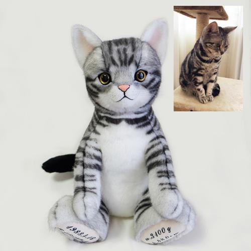 アメリカンショートヘア 愛猫 ウェイトキャット
