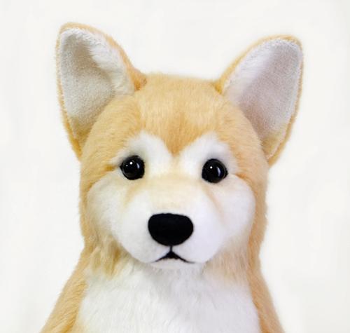 柴犬 ウェイトドッグ