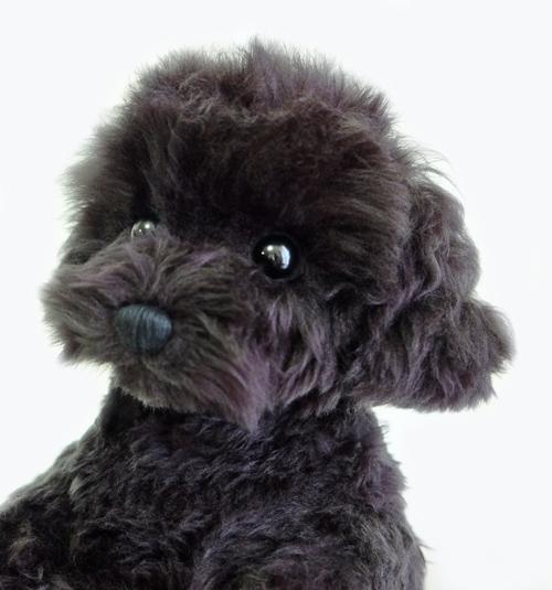 ウェイトドッグ 愛犬トイプードル ブラック