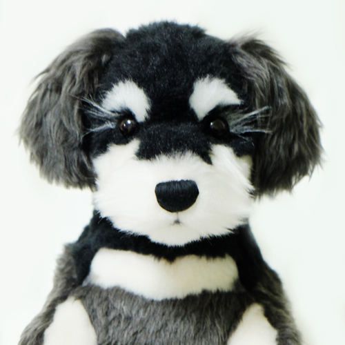 ウェイトドッグ ミニチュアシュナウザー 愛犬