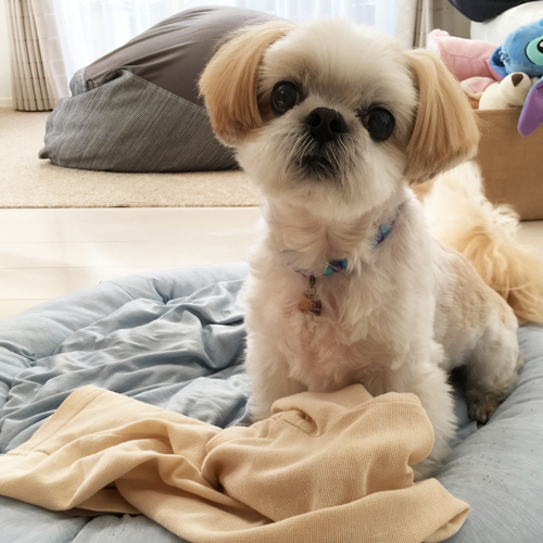写真から ペットそっくり シーズーのぬいぐるみ 愛犬