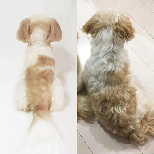 愛犬の写真からぬいぐるみ製作 シーズー フムフム
