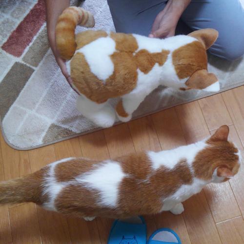 白茶ネコのぬいぐるみ ウエイトキャット ペットのウエイトドール