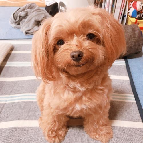 オーダーメイドぬいぐるみ 愛犬の写真 制作 ポメプー