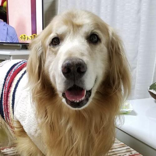 愛犬の写真から ぬいぐるみ制作 ウェイトドール