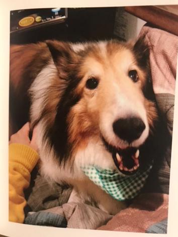オーダーメイド 愛犬シェルティのウエイトドッグ