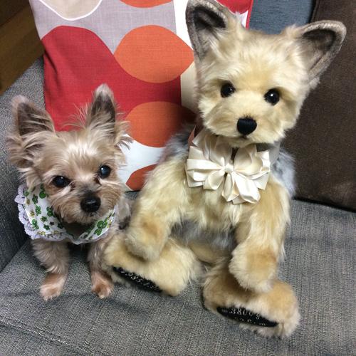 愛犬ヨーキーのウェイトドール ウエイトドッグ